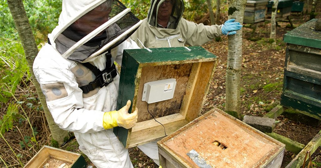 ApisProtect beekeepers installing devices