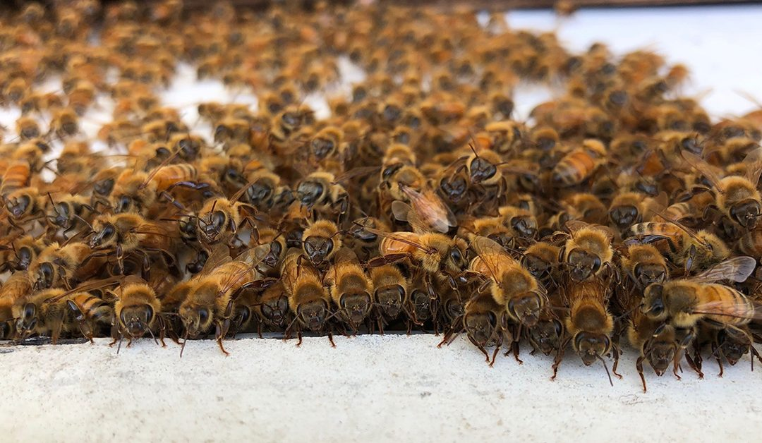 More Honey Bee Hives To Go High-Tech With ApisProtect