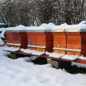 image of beehive covered with snow