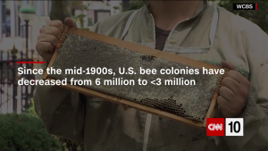 Text explaining loss of honey bees