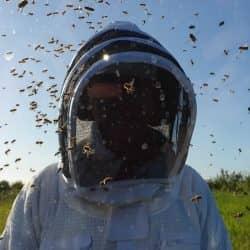ApisProtect Beekeeper