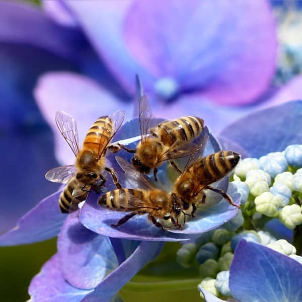 ApisProtect and Microsoft Working to Protect Honey Bees